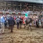2016 Travers Winner Arrogate Entering the Winner's Circle